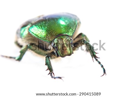 Shiny beetle Cetonia aurata isolated on white background