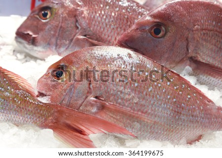 Shiny fresh ruby snapper fish on ice at a fish market - stock photo