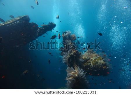 Shipwreck USAT Liberty (Tulamben, Indonesia) underwater shoot - stock photo