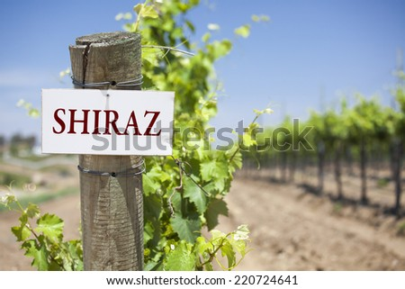Shiraz Sign On Post at the End of a Vineyard Row of Grapes. - stock photo