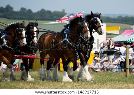 Shire Horses - stock photo