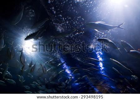 shoal fish - stock photo