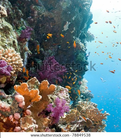 Shoal of anithias fish on the coral reef - stock photo