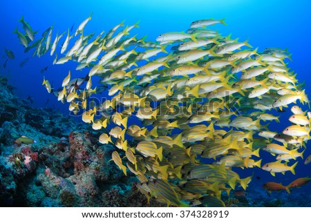 Shoal of colorful fish in the tropical coral reef