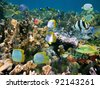Shoal of colorful tropical fish in a coral reef of the Caribbean sea - stock photo
