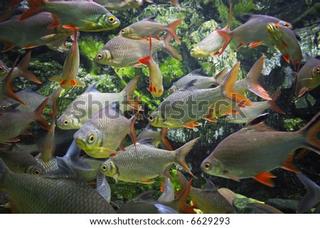 Shoal of fish - stock photo