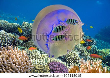 Shoal of fish and giant jellyfish - stock photo