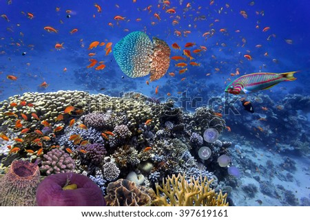 Shoal of fish and giant jellyfish.  Red Sea, Egypt - stock photo