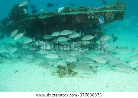 Shoal of fish and shipwreck underwater - stock photo