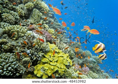 Shoal of fish on the coral reef - stock photo