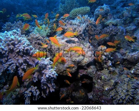 Shoal of fish on the reef