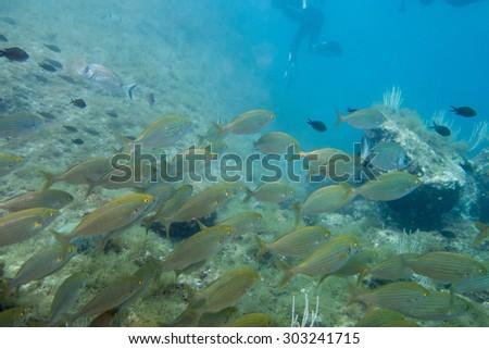 Shoal of fish swimming in ocean - stock photo