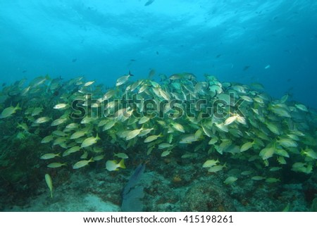 Shoal of fish underwater - stock photo