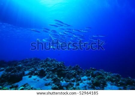 Shoal of Mackerel beneath fishing boat - stock photo