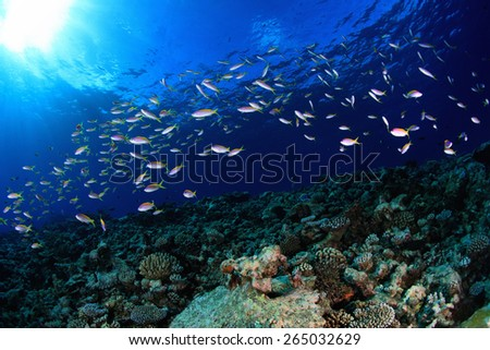 Shoal of small fish in the blue water of tropical ocean - stock photo