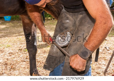 shoeing hooves riding domestic horses for recreation and sport - stock photo