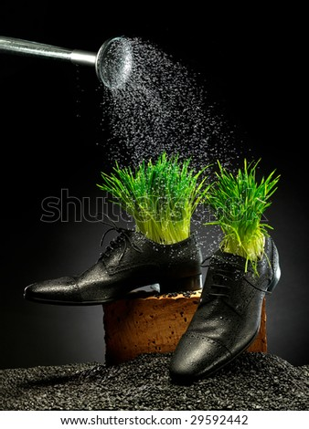 shoes are pouring from watering can. Green grass is growing. - stock photo