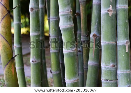 Shoot of Bamboo in the rain forest - stock photo