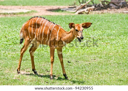Shooting, deer at a zoo in Thailand. - stock photo