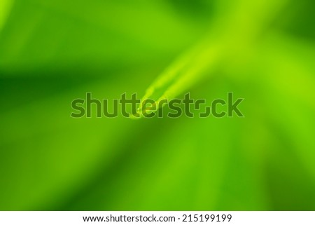 Shoots of Spring,green background