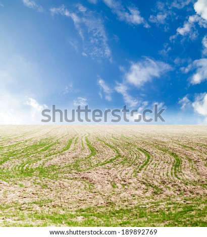 shoots on the field with a beautiful sky - stock photo