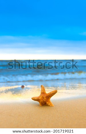 Shore Detail Star