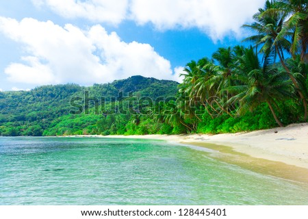Shore Dream Palms - stock photo
