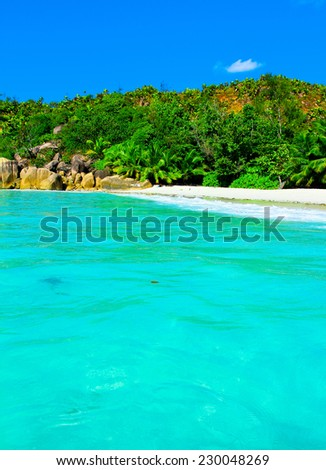 Shore Jungle Palms  - stock photo