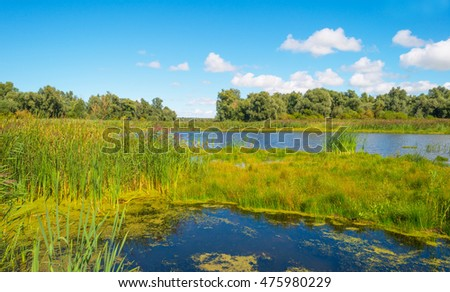 Shore of a lake in summer