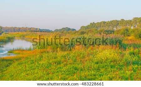 Shore of a lake in summer at sunrise