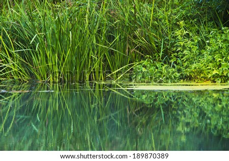 shore of a small river overgrown vegetation - stock photo