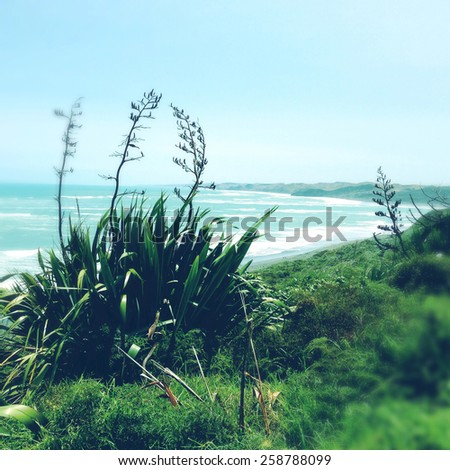 Shoreline and water, Raglan, New Zealand - stock photo