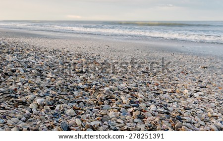shoreline covered by many cockleshells - stock photo
