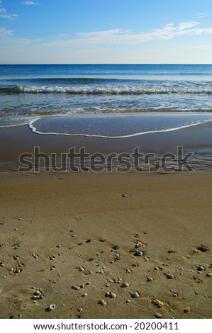 Shoreline in a sunny day. Shells and stones on the beach