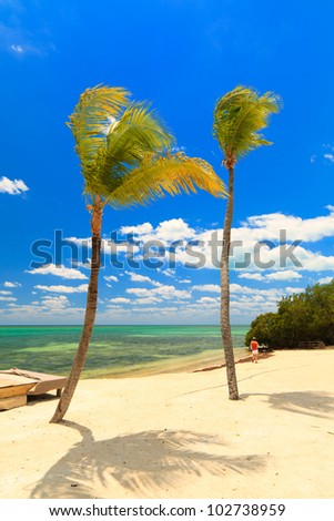 Shoreline of the Florida Keys on a windy day with tall palm trees against a blue sky. - stock photo