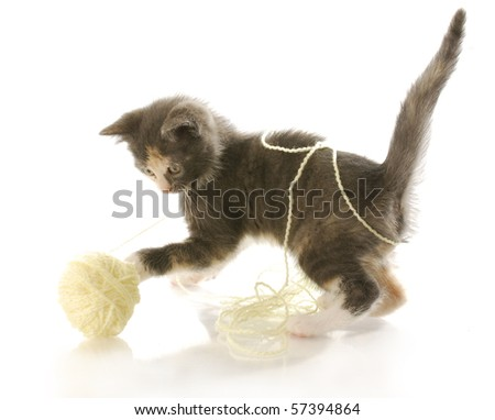 short haired kitten playing with ball of yellow yarn with reflection on white background - stock photo