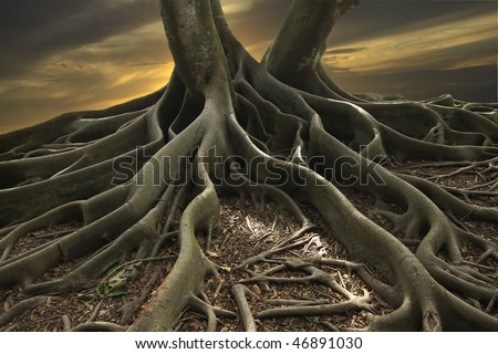 Shot of a Banyan Tree in Florida - stock photo