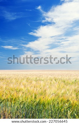 Shot of an Arable Field under Blue Sky - stock photo