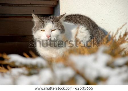 Shot of old cat sitting on balcony - stock photo