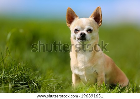 Shot of purebred dog. Taken outside on a sunny summer day. - stock photo