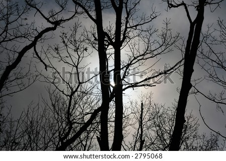 shot of the shine sunrise in the forest - stock photo