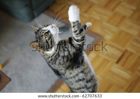 Shot of young, cute domestic cat playing - stock photo