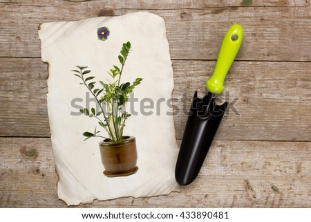 Shovel for horticulture and image houseplant on a wooden background - stock photo