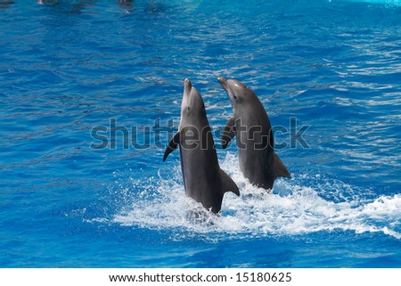 Show of dolphins swimming