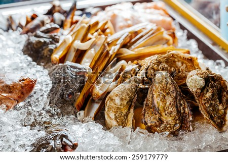 Showcase with ice, oysters and seafood - stock photo