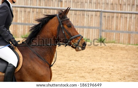 showjumping, horses head - stock photo