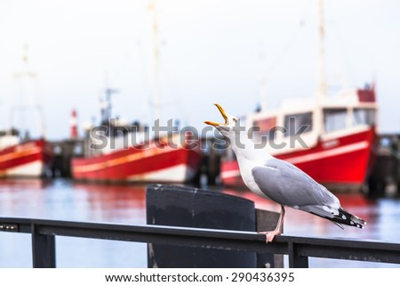 Shrieking seagull at a small harbor handrail and red fishing boats at the background/Cry of a Seagull - stock photo