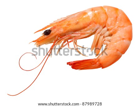 Shrimp Stock Photos, Illustrations, and Vector Art