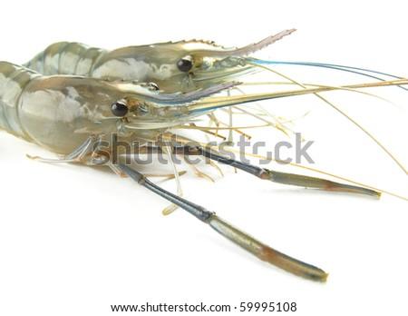 Shrimp big raw isolated on white background - stock photo