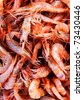 Shrimp close-up - stock photo